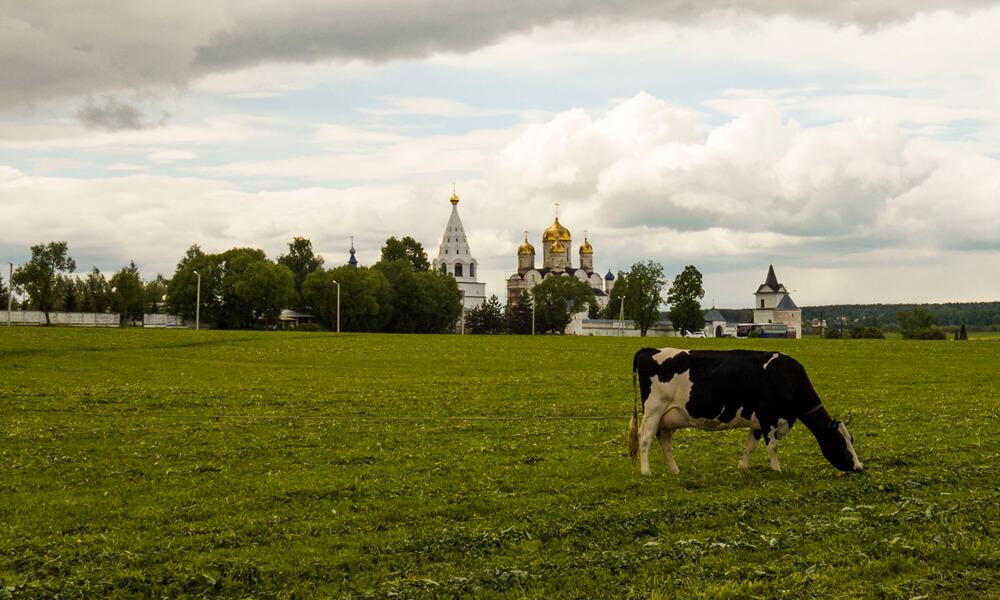Можайский Лужецкий Ферапонтов монастырь, фото